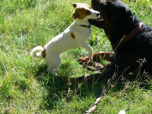 Modig hund!
