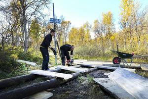 Precis där leden mot Sylarna börjar arbetar Hanna Vestman och Kalle Fors, länsstyrelsens fältorganisation, med att förbättra spängerna.