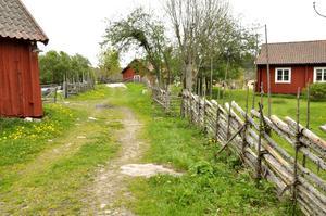 Lars Lodéns sommar inleddes med en resa till Ängsö nationalpark.