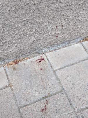 Blodsspår på Karlsgatan.