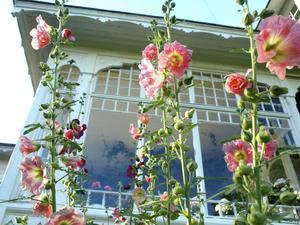 Blommor utanför Solbackens veranda.