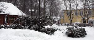 Nedsågad. Den kommunala julgranen i Surahammar sågades ner av okända gärningsmän under nyårshelgen.
