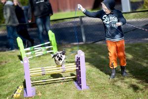 Alexander Romero, åtta år, sprang runt hinderbanan med kaninen Flora.