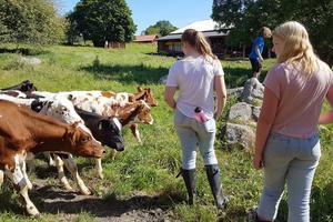 På lägren får deltagarna lära sig mycket om hur man hanterar, utfodrar och sköter olika djur. På grundkursen lär de sig hur man håller en gård med mjölkkor vid liv i händlese av till exempel krig och bönder blir tvungna att lämna sin gård.
