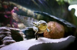 Många exotiska djur fanns bland akvarierna i djurtunneln.