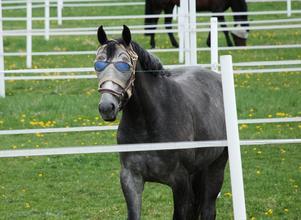 Häst med