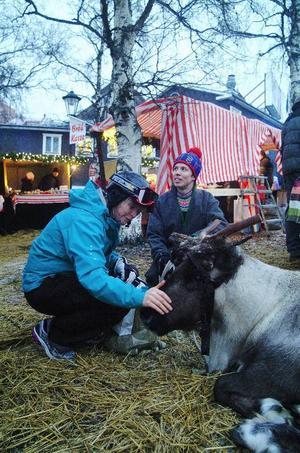 Det samiska inslaget i julmarknaden ses som exotiskt av turisterna. Under Luciahelgen ville många gulla med renen Olle, som kommer från Vålådalen och passas av Joel Bergkvist.