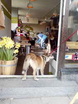 goda dofter. Himmelska dofter och Ludde vill omedelbart gå in på hundfiket i Stockholm.