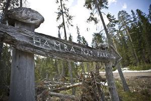 Hamra nationalpark, som fyllde 100 år i fjol, var en av de första nationalparkerna i Sverige.