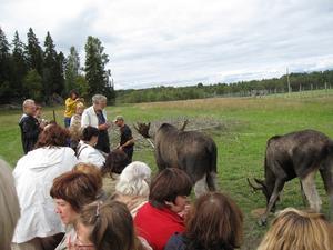 Besök på Gårdsjö Älgpark. Bild. Göran Lindal.