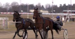 Erik Lindegrens hästar Bolt Boko till vänster och Ochongo Face värmer upp inför lördagens finaler på Solvalla.