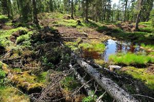 I Sverige brukar vi skog, vi förbrukar inte, eftersom det för varje träd som avverkas måste planteras tre nya plantor. Det svenska skogsbruket är i allra högsta grad hållbart, skriver debattförfattarna.
