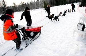 Det var två minuter mellan ekipagen. Här har Svein Teslo, Norge, just lyft upp snöankaret för att släppa loss hundarna i ett åttaspann.