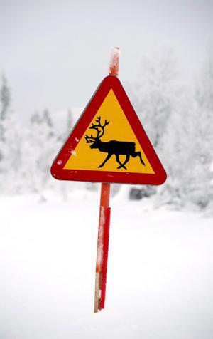 Ta varningsmärken för vilt på allvar. Varje år inträffar över 40 000 viltolyckor.