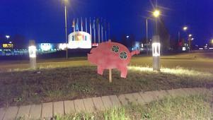I rondellen vid Lillänge kan du se en av fem rondellgrisar som nyss satts upp i Östersund.