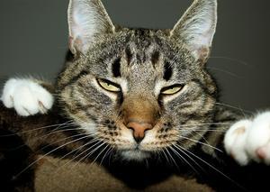 Så här tråkigt tyckte katten Tage att det var när han i höstas hade opererats och inte fick gå ut och jaga möss.. :)