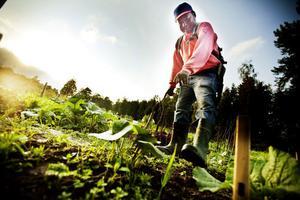 Kyaw Htwe odlar allt möjligt i sina kolonitäppor.