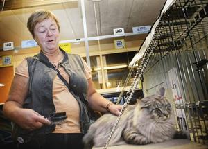 """Fixar pälsen. Britt Svensk från Stockholm förbereder King Artur för catwalken. """"Egentligen är jag mest här för att träffa andra kattintresserade. Tävlingsmomentet är mindre viktigt"""", säger hon."""