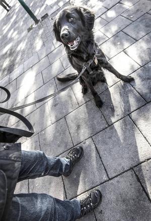 Nelson är en blandning av Flatcoated retriever och Labrador och två år gammal. Bästa han vet är att springa lös i skogen och att leka dragkamp. Torrfoder är det som gäller i matväg och han belönas med vanliga hundgodisar. När han träffar folk blir han så glad att han hoppar för att hälsa, något som matte Gunnel försöker få bort. Nelson är berest och har tågluffat i Italien under tre veckor och det gick hur bra som helst, enligt matte.