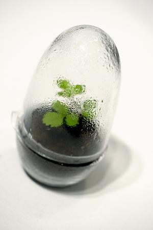 Miniväxthus. Miniväxthuset Gro är ett av föremålen nominerade till designpriset Formidable. Växthuset produceras av Skruf glasbruk.