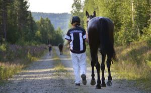 Amazing View!  Fantastisk utsikt – ja, hästen har faktiskt det passande namnet. I den natursköna miljön varvas hästarna ner efter sina lopp – här Emmie Mårtensson med just Amazing View.