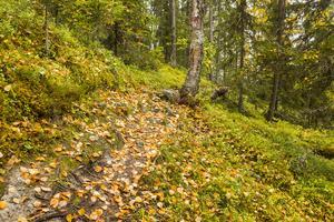 Mats Ricklund har valt att lägga kursen på hösten för höstfärgerna.