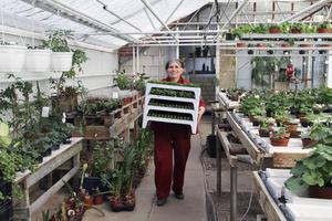Denka från Bulgarien är en stor tillgång i växthuset. Hon tycker jobbet är bra och trivs med gemenskapen i Centrumkyrkan, dit hon går med Marianne och lär sig svenska.