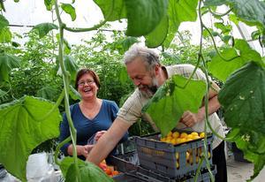 Glädjen är stor när de röda läckerheterna äntligen kan skördas och både Lea och Uno Hörnström har fullt upp med att paketera de nyplockade grönsakerna.