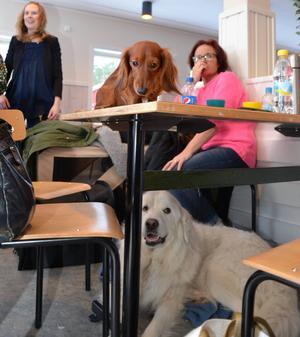 Hundar fanns det överallt i de två danslokaler på Orrskogen. Här kollar den långhåriga kanintaxen omgivningen från bordsnivå medan pryreneerhunden Josefine gillar golvets som underlag.