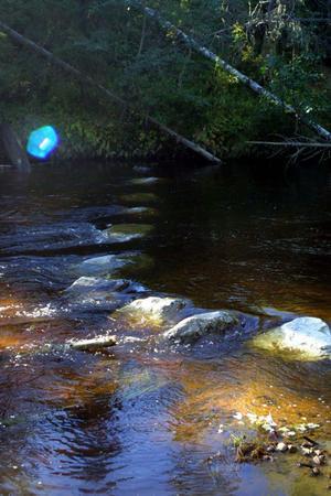 Fisken hindras från att vandra upp i Gnarpsån, men snart kan den gamla dammen vara borta.
