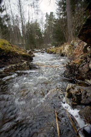 Överloppsrännan från dammen vid Sofieholm är tillräckligt vattenfylld för att en del fisk fortsatt vandra upp i Nianån sedan dammen byggdes 1909.