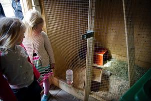 När barnen besökte Stora Holmens djurhus i dag fanns inte kaninerna eller marsvinen kvar.