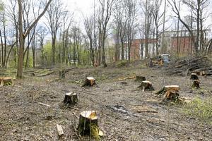 Förorenad mark. Efter sanering ska det bli natur- och parkmark. Men först ska arkeologer gräva ut en medeltida ugn.Foto: Yngve Fredriksson