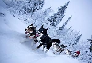 Om turer med hundspann berättar Gösta Olsson.arkivbild: anders olsson