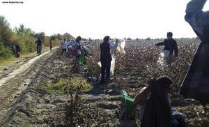 I Turkmenistan tvingas tiotusentals människor varje år till hårt arbete med bomullsskörden. Svenska H&M medger nu att de köpt bomull från Turkmenistan.