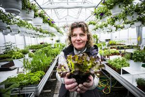 – Det är populärt att odla det som går att äta nu för tiden, säger Marie Gunnarsson.