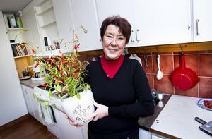 Gertrud Edström  odlar 13-14 olika sorters chili. Men den dåliga sommaren har gjort att chilin inte mognat i år