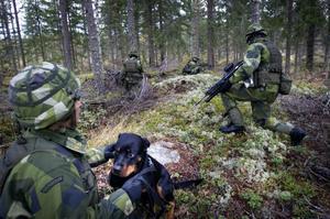Flera hundar deltog i övningen. De kan snabbt lokalisera motståndaren.