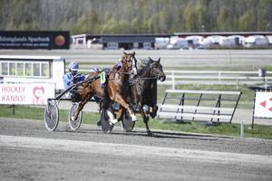 Hagmyrenhästan Ratata Zenz finns med på Thomas Sandbergs V5-kupong.