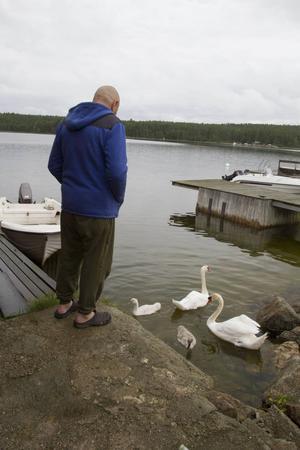 Hela hösten och vintern har Karl-Erik Åström matat ett svanpar. Nu äter de gräs i stället men tycker om att simma runt vid hans brygga.