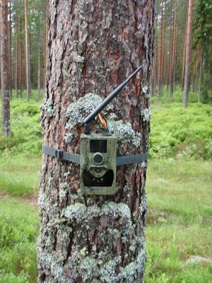 Ytterligare en olaglig åtelkamera har hittats i Rättviks skogar.
