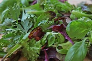 Blandade blad. Blad med varierande färg och smak ger liv åt salladen.