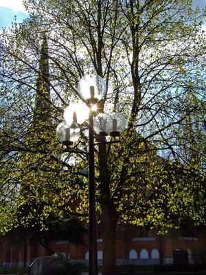 Den 6 maj, då jag skulle gå in på biblioteket i Västerås, såg det ut som om lyktorna var tända. Men det var vår Herres starka lampa som lyste upp några av lyktorna och lyste igenom det skira lövverket.