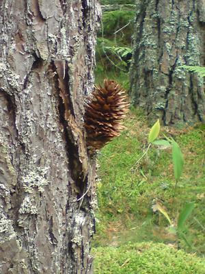 Hittade denna snillrika lösning i svampskogen, antagligen en ekorre som tänkt till...