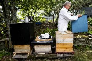 Jan Mikaelsson bygger sina bikupor själv. Han ser det som en rolig del i arbetet som biodlare.