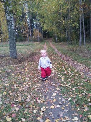 Våran son Elvin Hoijar som är ute på en promenad en härlig höstdag i oktober.