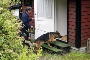 """LIKHUND. En hund som kan känna av molekyler från döda kroppar har använts i Sandviken för att finna """"Kjelle Blues"""". Bland annat vid den för människorov misstänkte 46-åringens bostad. Ett exempel på en likhund som har använts i Sverige är Arko, som här på bilden tillsammans med sin förare Leif Bergqvist sökte efter en kropp i en annan del av Sverige utan koppling till """"Kjelle Blues"""" försvinnande."""