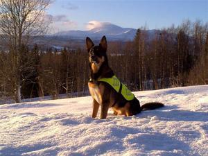 Min hund Hero poserar glatt i Ringsta, Järpen med Åreskutan ibakgrunden 17/1-2010 Foto: Anna-Stina Tengström