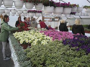 Blomsterprakten och doften var bedövande i växthusen.