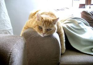 10. Albin, Norrsundet. Han är sex år och en blandning av bondkatt och perser. Albin är en livsnjutare som älskar att äta, gosa och busa ute i trädgården. Ibland släpar han in en och annan fågel i huset. Men bäst av allt tycker Albin är att slappa på armstödet till soffa, skriver matte Marlène Zetterberg.